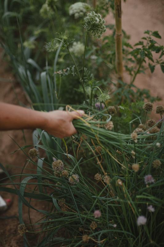 Agrolife autoconsumo Valencia