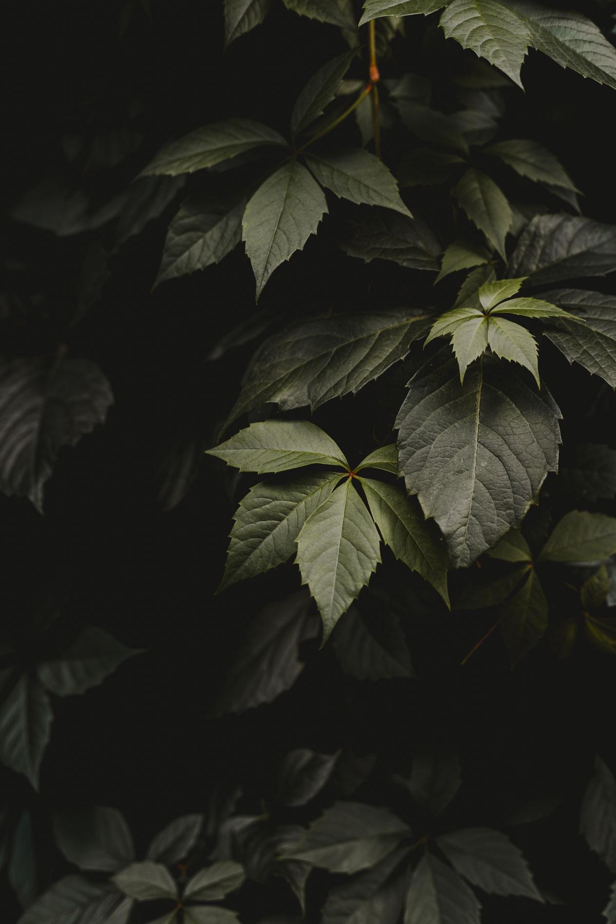 Hojas verdes - La Cierva Verde